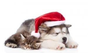 Joulutervehdys