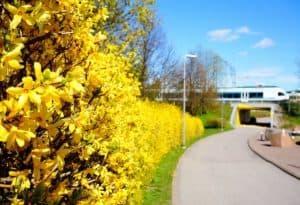 Suomen Seniorihoiva Vantaan henkilökohtaisen avun palvelusetelituottajaksi